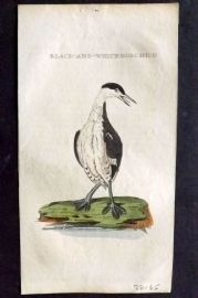 Brightly (Pub) 1815 Hand Col Bird Print. Black and White Bobchick